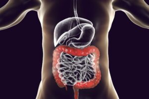 Probiotics and the Human Digestive System and Over All Health